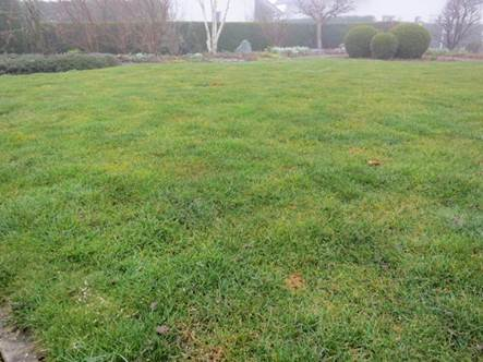 ungedünger Rasen im März