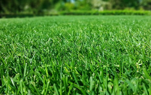 Beitragsbild schöner Rasen
