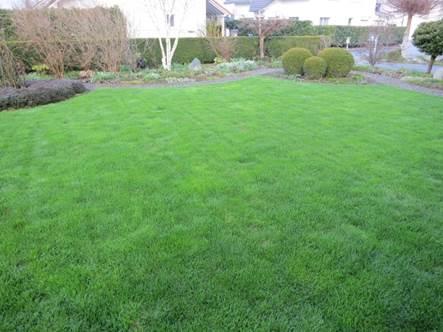 Rasen nach zwei Wochen