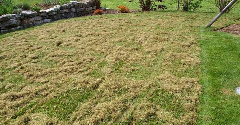 Wann Sollte Man Den Rasen Vertikutieren