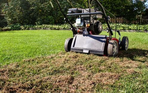 Richtiges Vertikutieren des Rasens