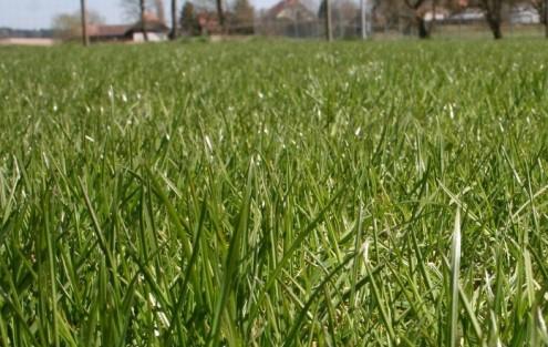 Schöner, regenerierter Rasen
