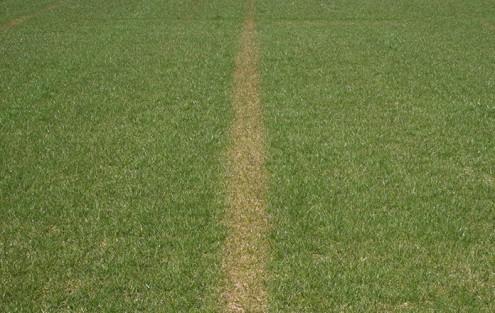 Gelber Streifen im Rasen aufgrund Überdüngung