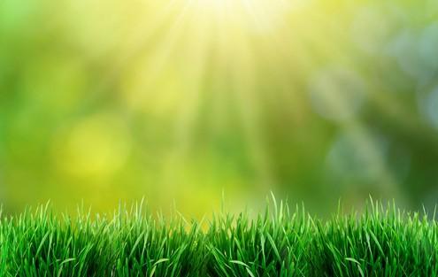 Schöner, wüchsiger Rasen- mitRasen-Tardit gedüngt