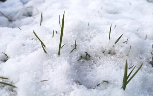 Schneebedeckter Rasen