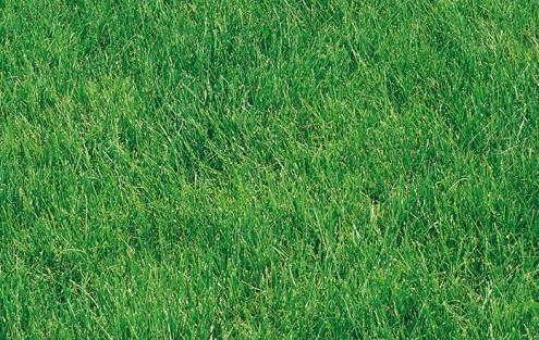 Schöner grüner Rasen