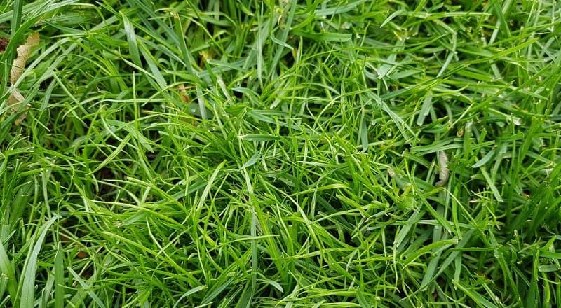 Kahlstellen im Rasen - neue Gräser