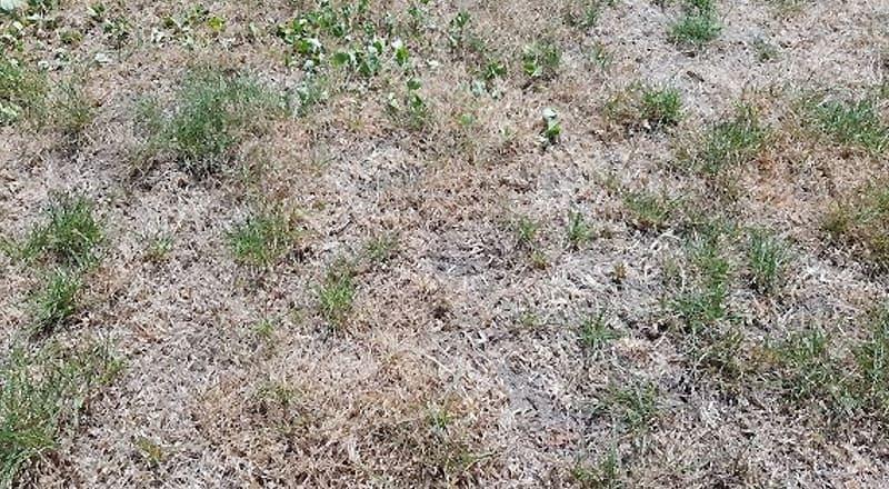 Vertrockneter Rasen - was tun?