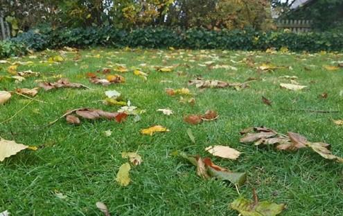 Einzug Herbst