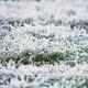 Frost im Rasen