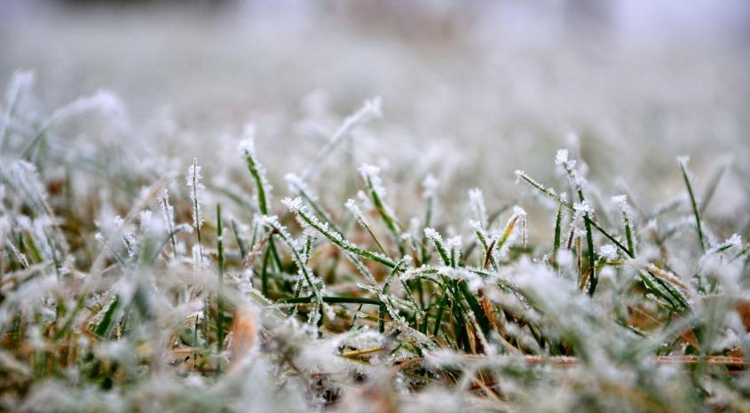 Rasein im Winter